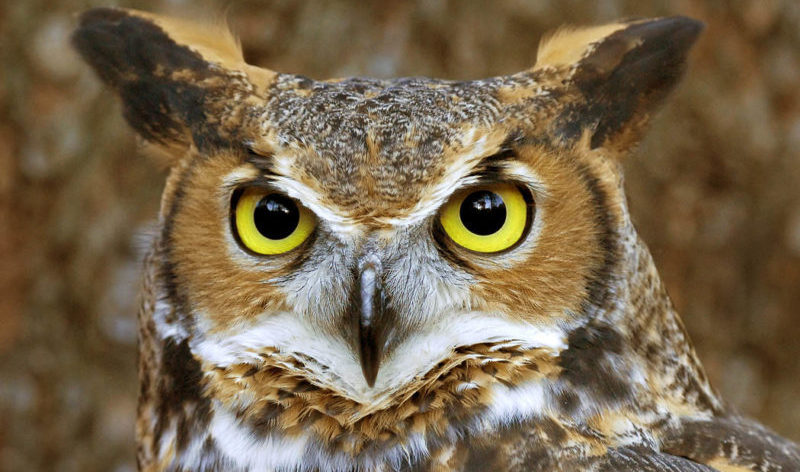 Hootsuite takes on debt to further expansion via M&A