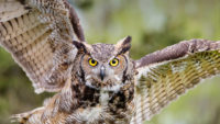 Hootsuite secured debt to further expansion