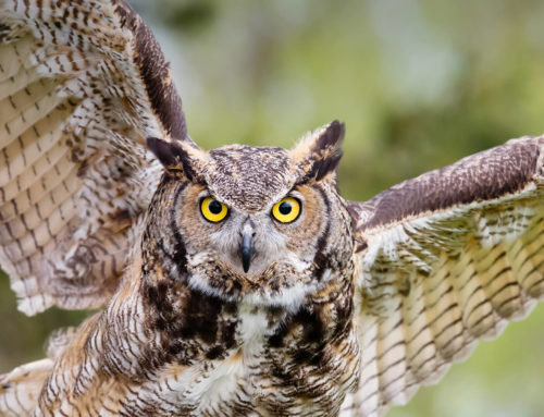 Hootsuite takes on Debt
